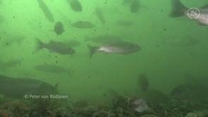 Vissen onder de Zeelandbrug