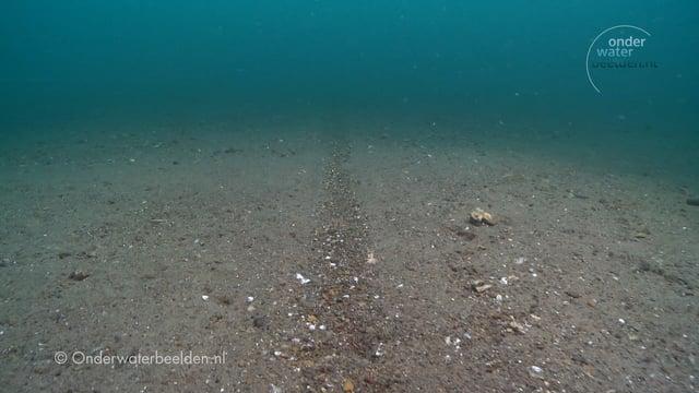 Boomkorvisserij op de Noordzeebodem