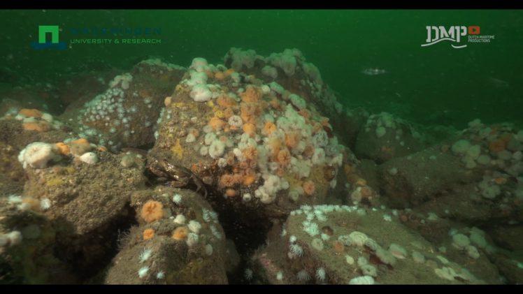 Biodiversiteit onderwater rond platforms op zee