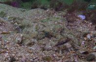 MSC Zoe afval op de bodem van de Noordzee