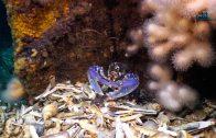 Zeeduivel bijt naar vis
